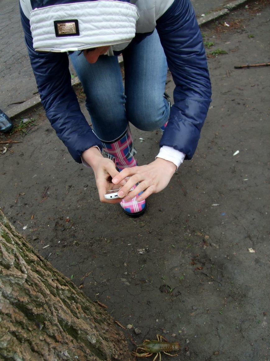 На улицах Донецка после дождя появились раки (ФОТО) (фото) - фото 2