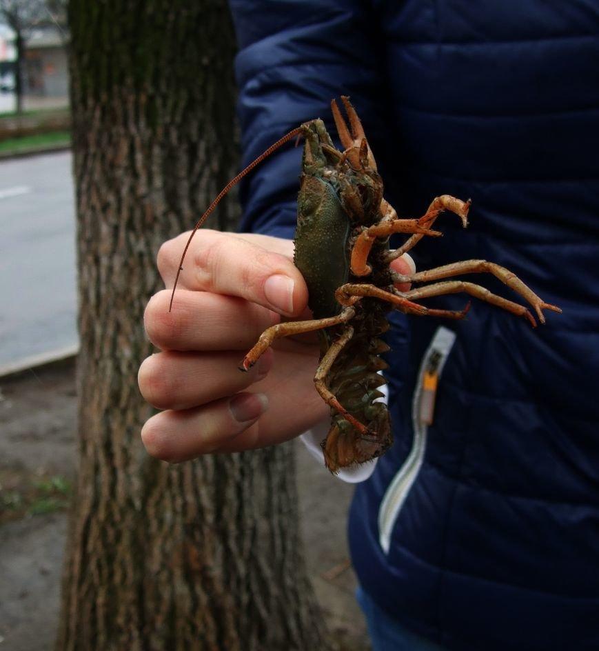 На улицах Донецка после дождя появились раки (ФОТО) (фото) - фото 3