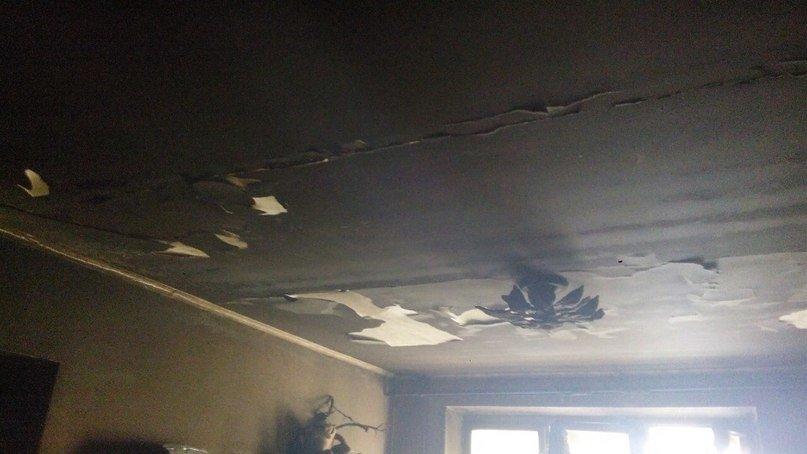У Львові вогонь забрав життя чотирилапого друга. Квартира згоріла вщент (ФОТО) (фото) - фото 2