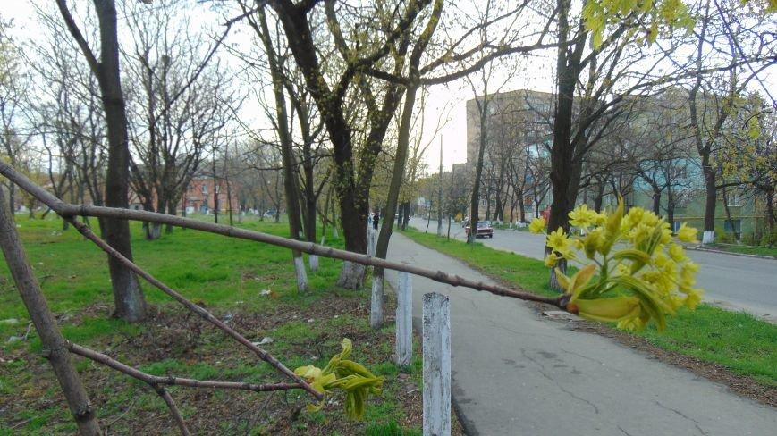 В Мариуполе замерзали расцветшие  деревья и цветы. Сегодня в городе ожидается шторм (ФОТО) (фото) - фото 1