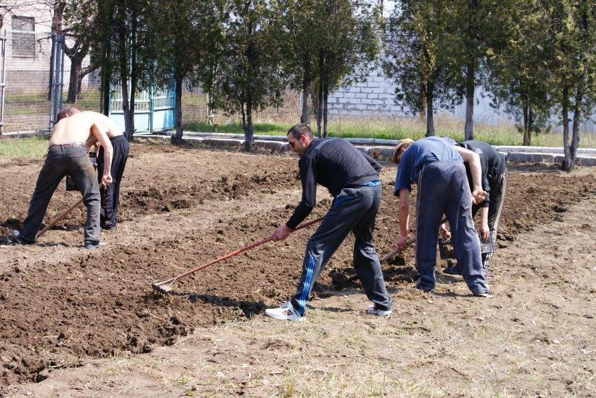 В Мариуполе осужденные посадили полтонны картофеля (ФОТО) (фото) - фото 1