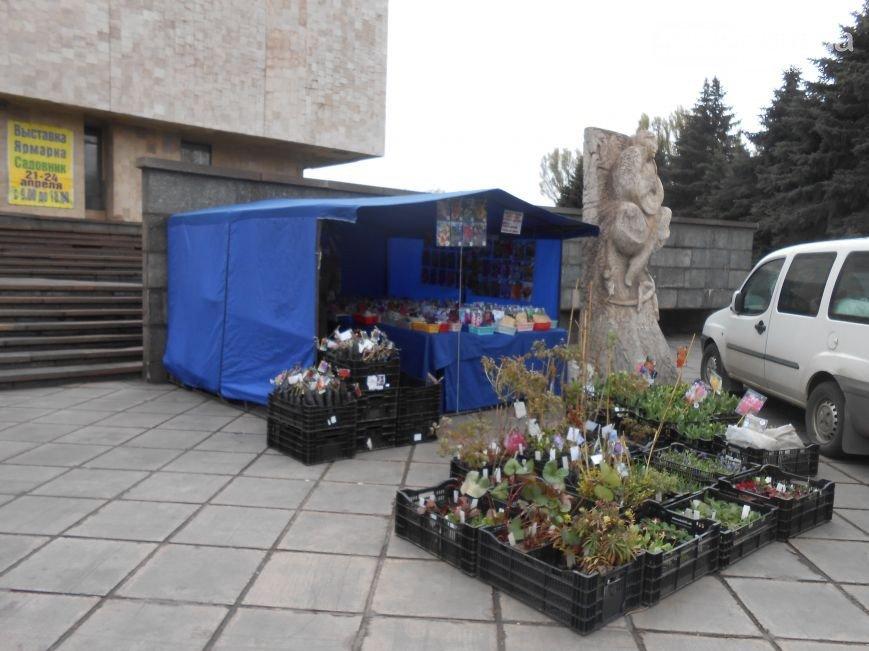 В Днепродзержинске проходит зеленая выставка-ярмарка (фото) - фото 2