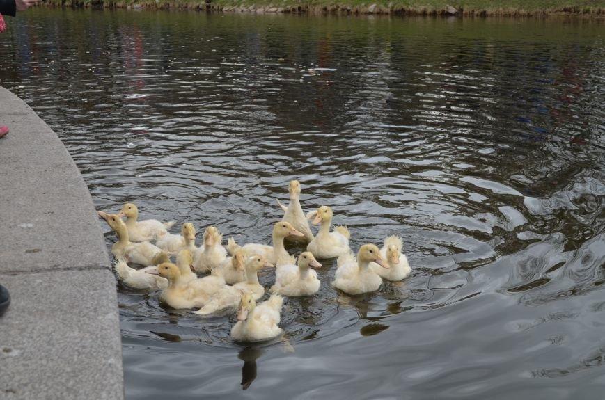 Александр Кержаков выпустил в пруд Таврического сада 11 утят (фото) - фото 1