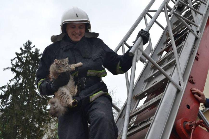 У Львові рятувальники зняли з дерева перелякану кицьку (ВІДЕО, ФОТО), фото-4