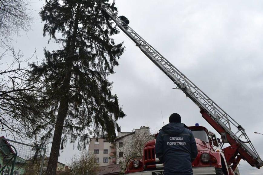 У Львові рятувальники зняли з дерева перелякану кицьку (ВІДЕО, ФОТО), фото-2