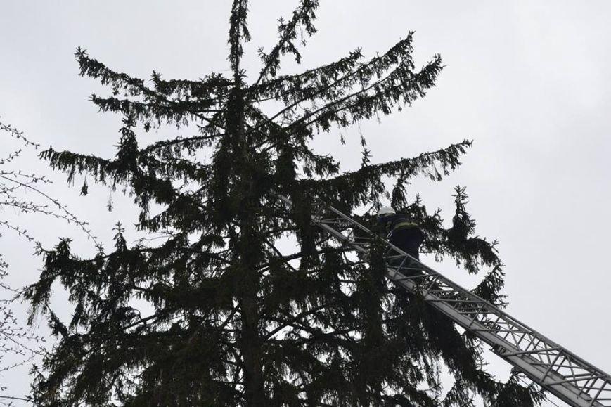 У Львові рятувальники зняли з дерева перелякану кицьку (ВІДЕО, ФОТО), фото-1