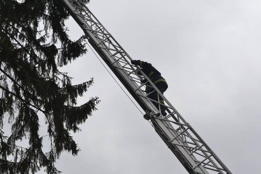 У Львові рятувальники зняли з дерева перелякану кицьку (ВІДЕО, ФОТО), фото-3