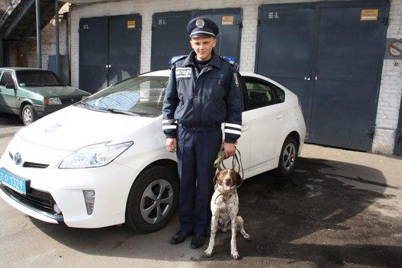 В Кременчуге на охране правопорядка работают четыре собаки: кокер-спаниель, лабрадор, немецкая овчарка и курцхаар (фото) - фото 1