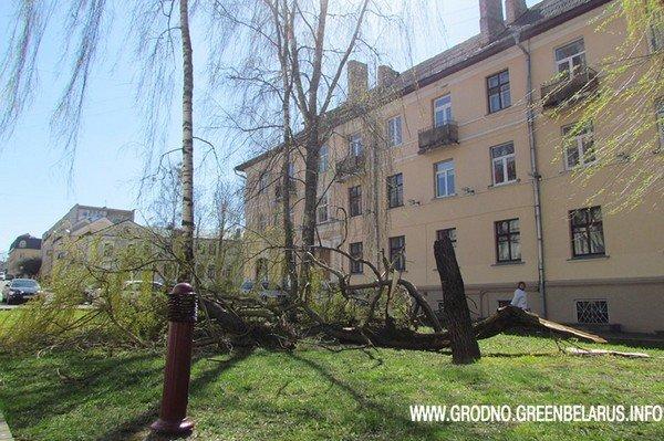 Фотофакт: на ул. Социалистическая сильный ветер повалил несколько деревьев (фото) - фото 1