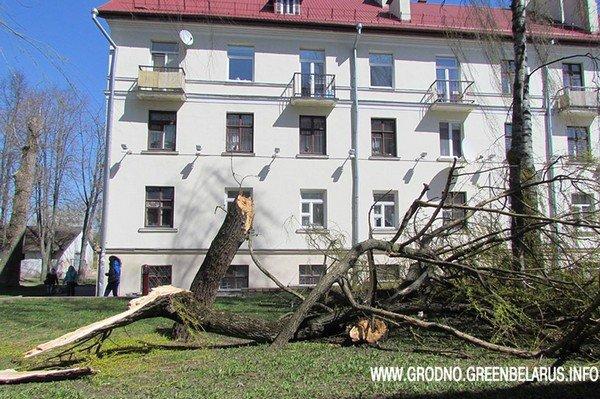 Фотофакт: на ул. Социалистическая сильный ветер повалил несколько деревьев (фото) - фото 2