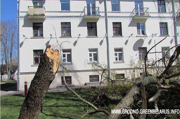 Фотофакт: на ул. Социалистическая сильный ветер повалил несколько деревьев (фото) - фото 3