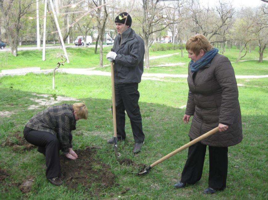 Сиреневая роща возле Днепровского райисполкома Херсона растет!, фото-2