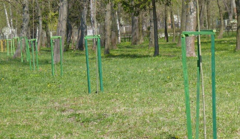 Тернопіль приєднався до Всесвітньої ініціативи «Дерева миру» (фото) (фото) - фото 1