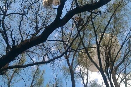 На Днепропетровщине спасли парашютиста (фото) - фото 1