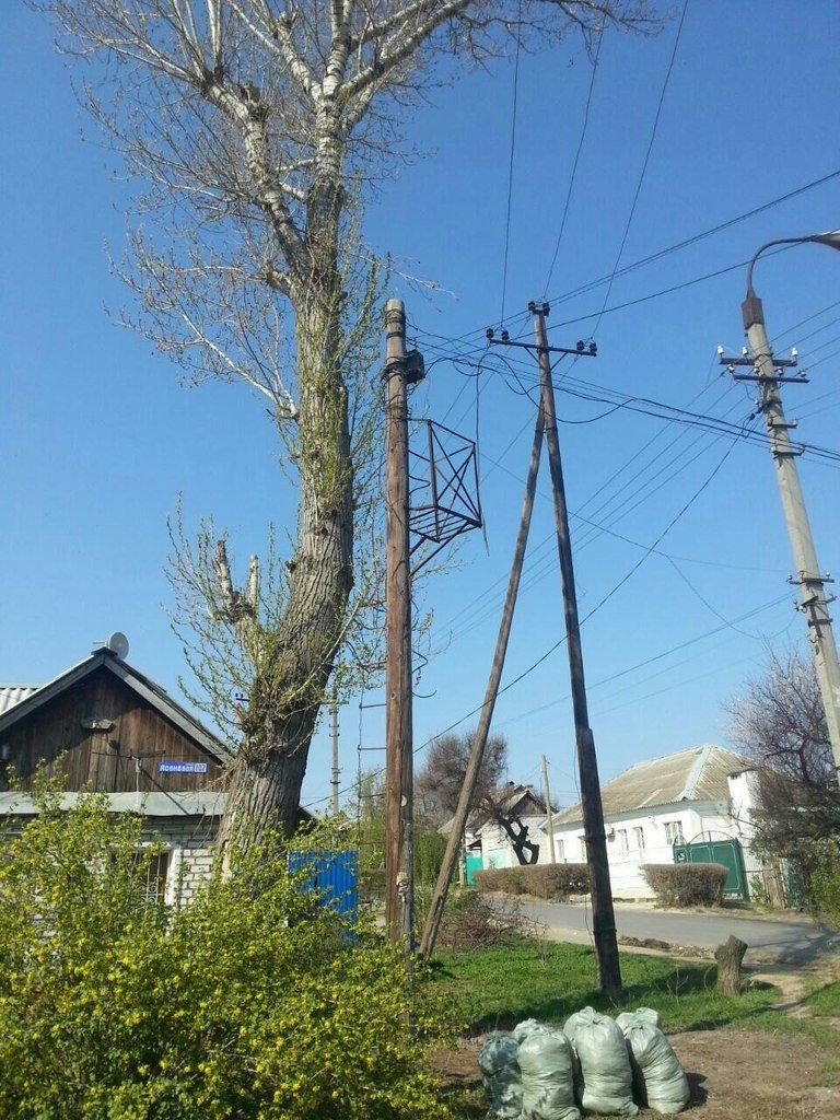 Жители Кировского района борются с опасным тополем (фото) - фото 1