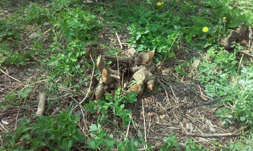 У Тернополі по вул. Миру почати вирубку дерев під забудову (фото) (фото) - фото 1