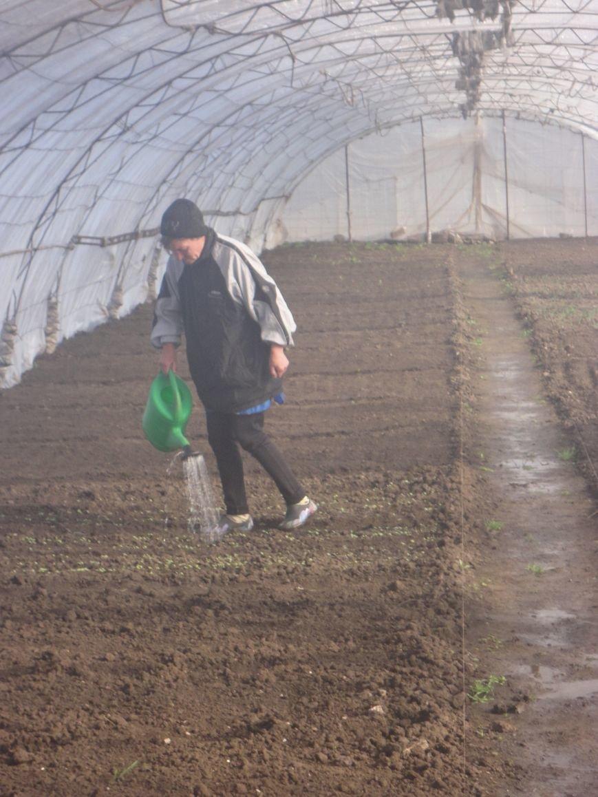 В Мариупольской колонии высадили 10 тысяч семян помидоров (ФОТО) (фото) - фото 1