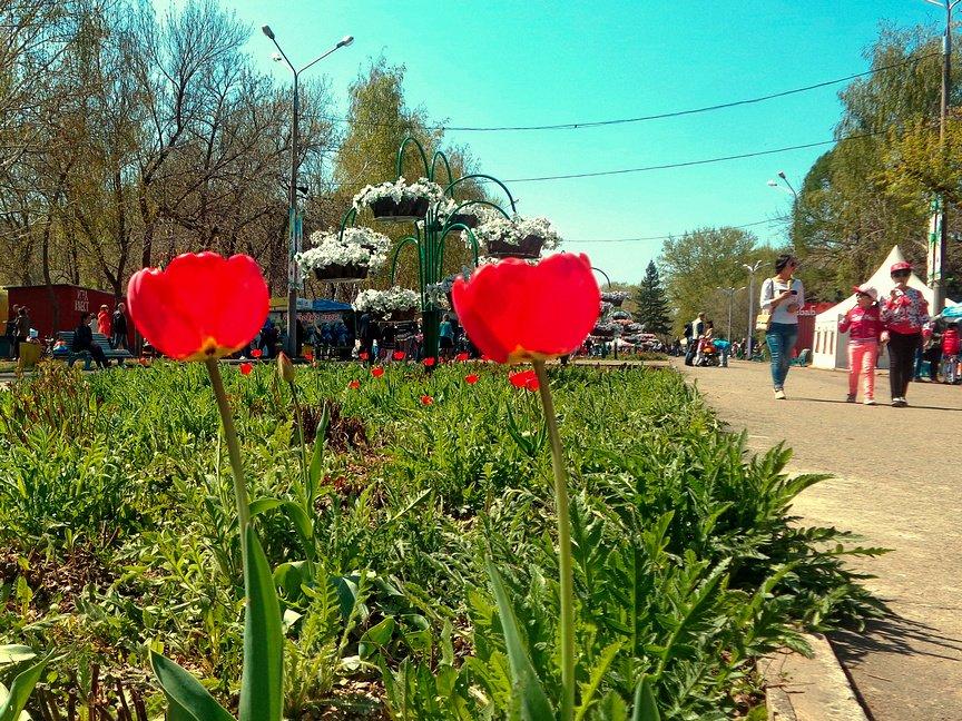 Парк «Металлург» открыл свои двери для горожан, фото-4