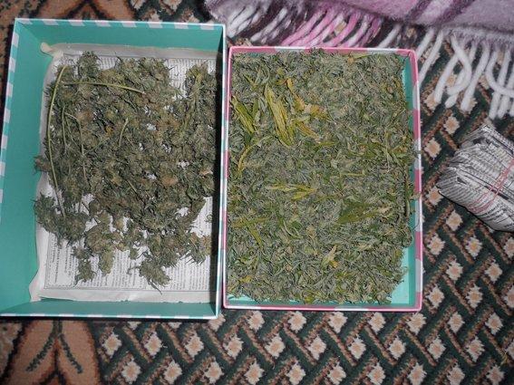 Вирощуванням коноплі займався на дачі (фото) - фото 2