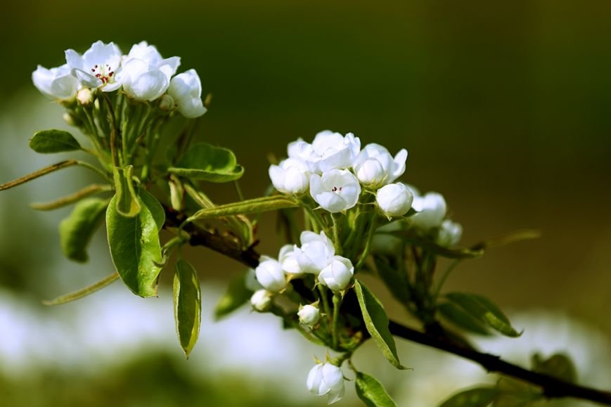 Тернопільське диво. На Буччачині розквів найбільший фруктовий сад (ФОТОРЕПОРТАЖ) (фото) - фото 1
