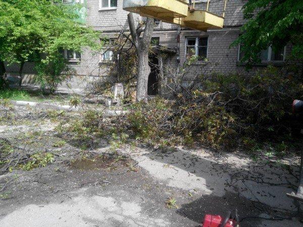 В Запорожье местные жители жалуются, что коммунальщики спилили многолетний грецкий орех (фото) - фото 1