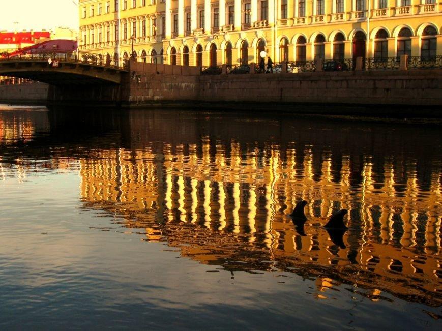 В Петербурге на канале Грибоедова появилась пара влюбленных весенних дельфинов (фото) - фото 1