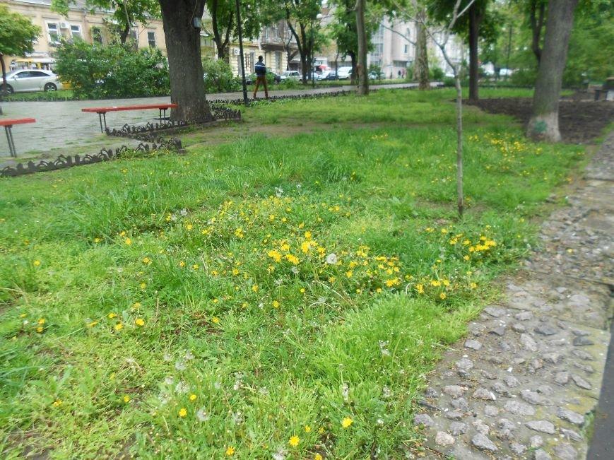В Одессе настоящая весна зацвела каштанами (ФОТО) (фото) - фото 3