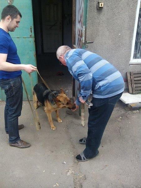 Мариупольский пенсионер приютил собаку из зоны АТО (ФОТО), фото-2