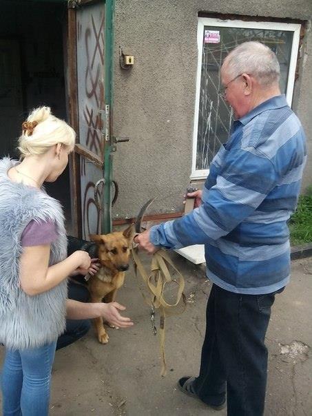 Мариупольский пенсионер приютил собаку из зоны АТО (ФОТО), фото-3