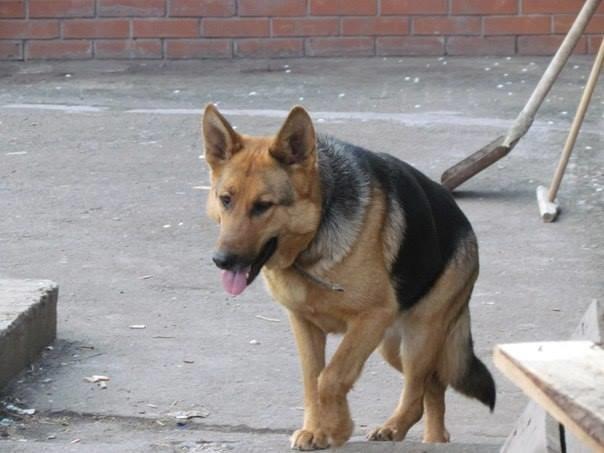 Мариупольский пенсионер приютил собаку из зоны АТО (ФОТО), фото-4