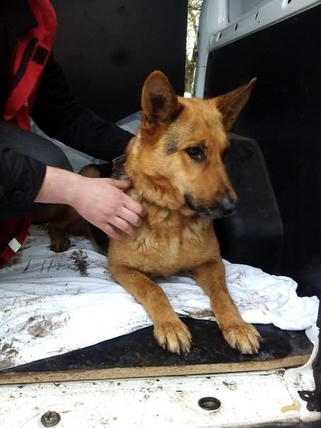 Мариупольский пенсионер приютил собаку из зоны АТО (ФОТО), фото-5