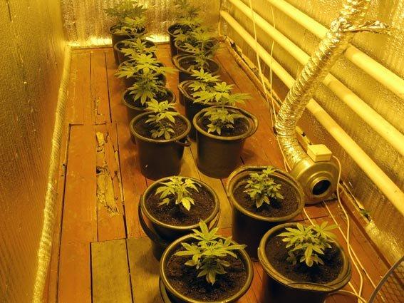 На Харьковщине мужчина устроил дома плантацию конопли (ФОТО) (фото) - фото 1