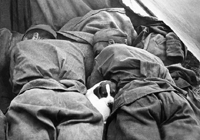 Военные кадры, цепляющие за душу (фото) - фото 1
