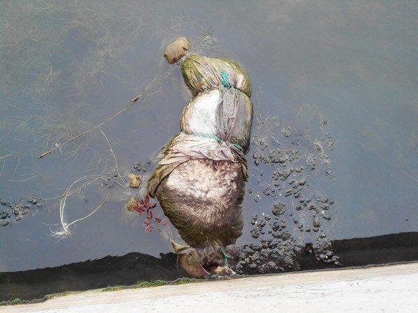 В мариупольской речке плавают трупы животных (ФОТОФАКТ, 18+) (фото) - фото 1
