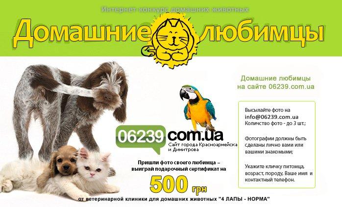 конкурс_животные1