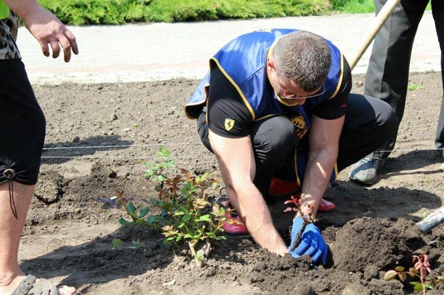 «Сумчане» высадили 300 кустов роз (ФОТО), фото-8