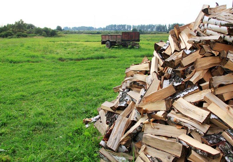 Лесничества Подольска, Домодедово, Чехова предлагают дрова домодедовцам (фото) - фото 1