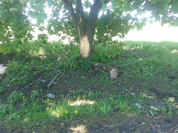 Трагическая смерть: водитель «семерки» погиб от столкновения с деревом, фото-2