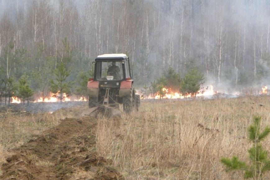 В Черниговской области молодежь для развлечения сожгла гектар леса (фото) - фото 1
