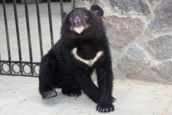 В Харьковской зоопарке родилась двойня гималайских медведей (ФОТО) (фото) - фото 1