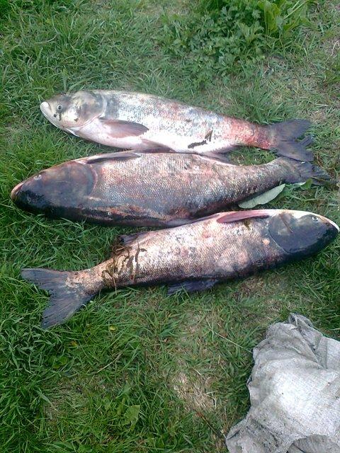 В Кировоградской области на горячем поймали браконьеров. ФОТО (фото) - фото 1