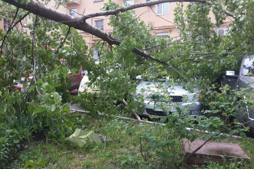 В центре Белгорода тополь упал на припаркованные автомобили (фото) - фото 2