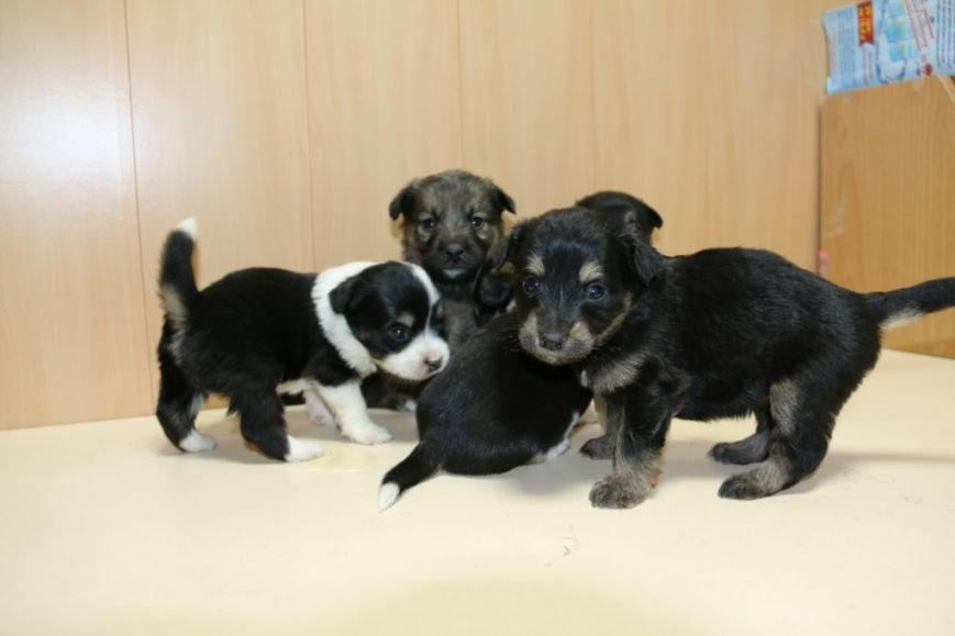 Помогите спасти щенков!, фото-1