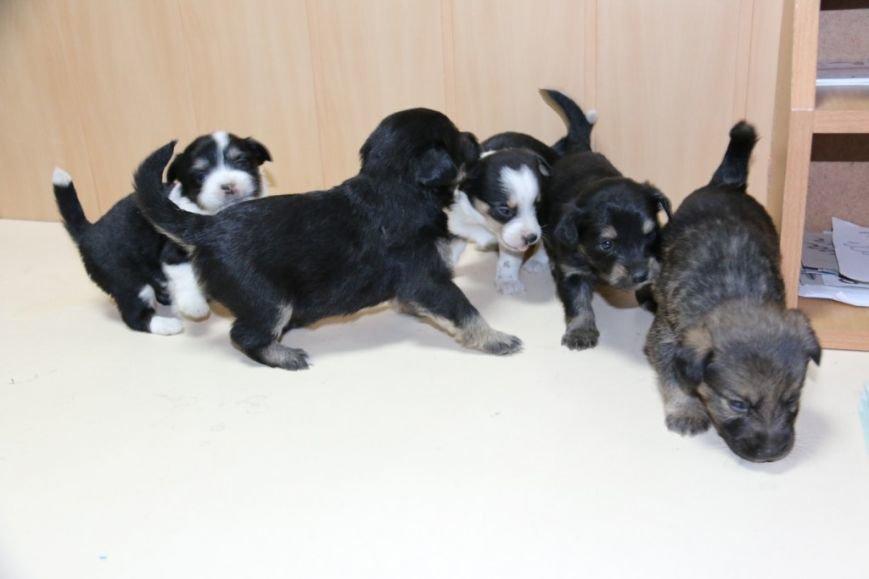 Помогите спасти щенков!, фото-4