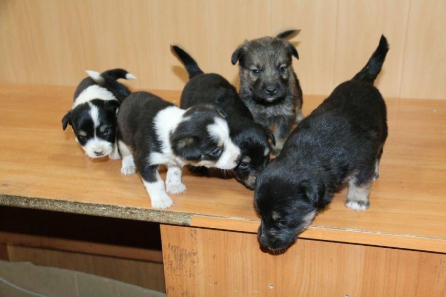 Помогите спасти щенков!, фото-5