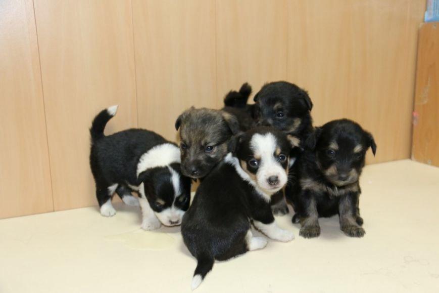 Помогите спасти щенков!, фото-2