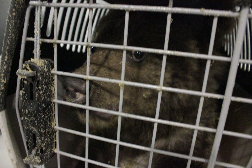 "В аэропорту ""Борисполь"" служба безопасности обнаружила в багаже двух медвежат (ФОТО) (фото) - фото 1"