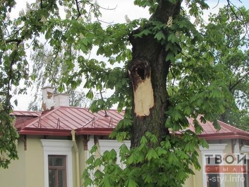 Фотофакт: из-за сильного ветра на ул. Ожешко обвалилось дерево (фото) - фото 3