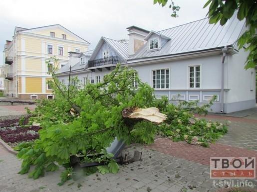 Фотофакт: из-за сильного ветра на ул. Ожешко обвалилось дерево (фото) - фото 4