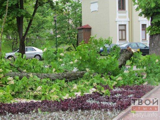 Фотофакт: из-за сильного ветра на ул. Ожешко обвалилось дерево (фото) - фото 1